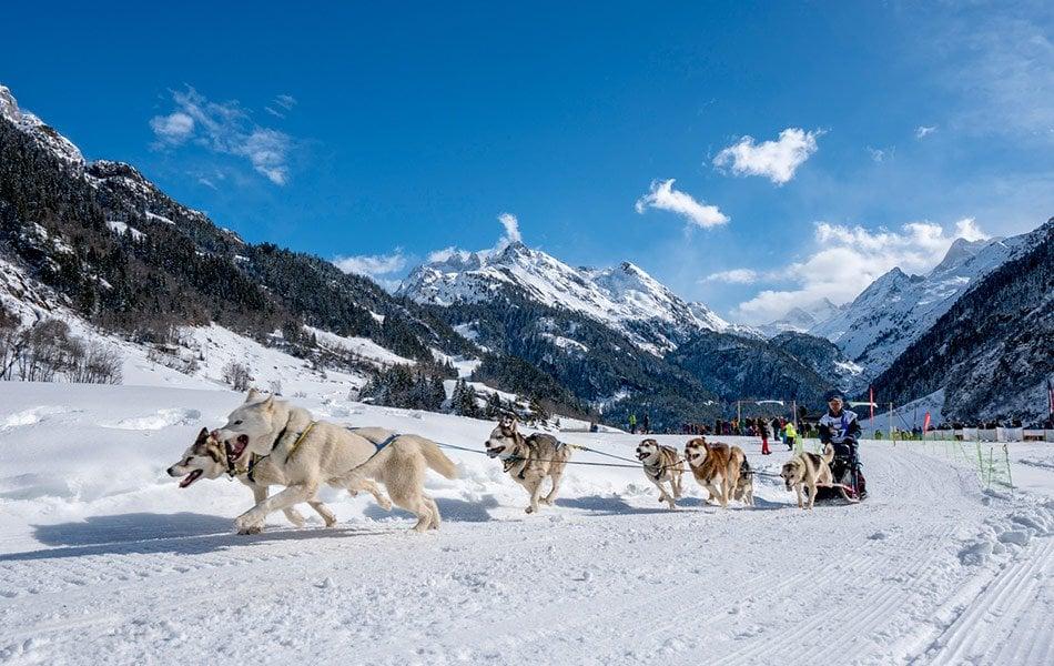 Schlittenhunderennen Gadmen by David Birri